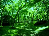 森林.jpg